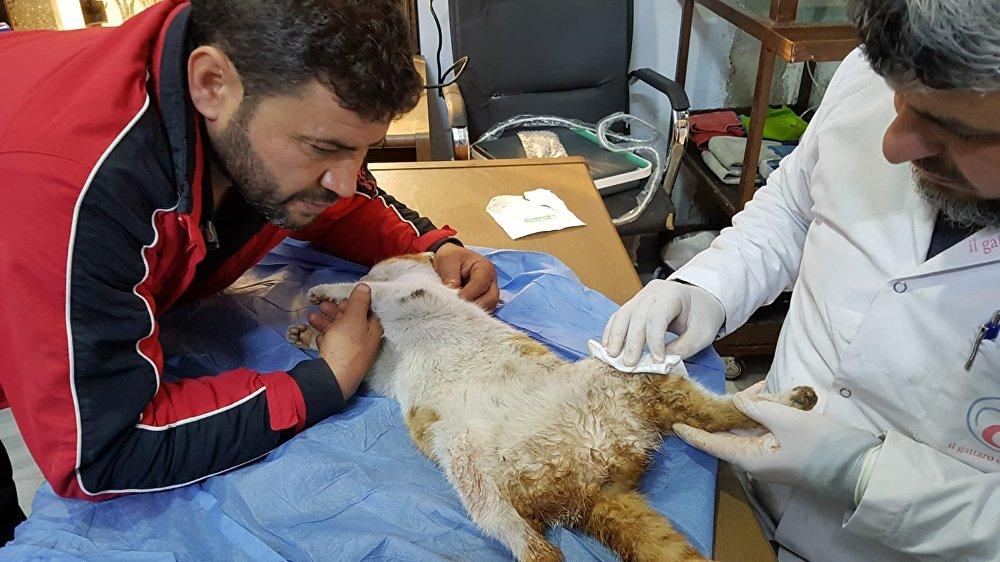 محمد علاء الجليل في العيادة للحيوانات