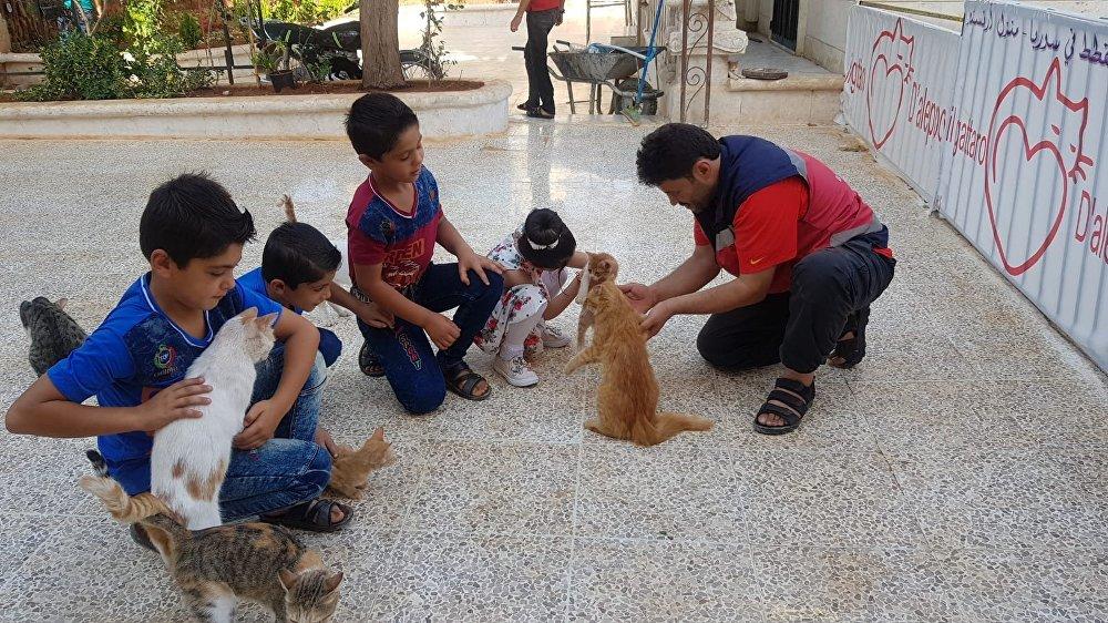 الأطفال السوريون في محمية القطط في حلب