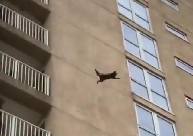 شاهد ماذا حصل لحيوان الراكون بعد قفزه من الطابق التاسع