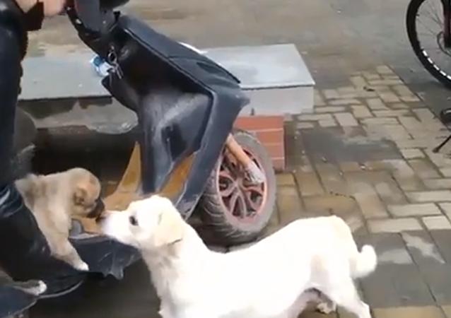 فيديو مؤثر للغاية لكلبة تودع جروها الصغير