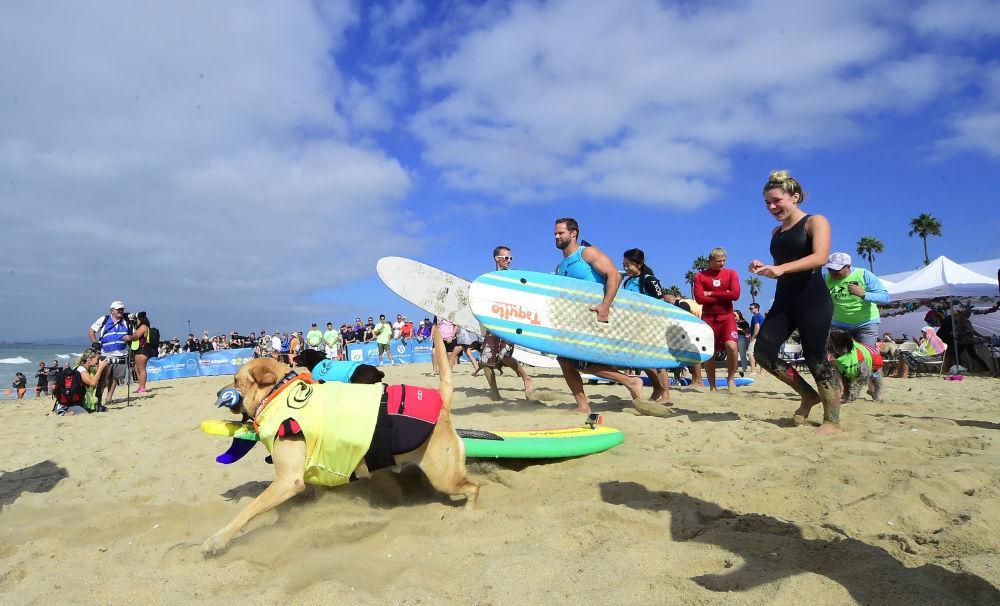 كلب التزحلق على الألواح أثناء مسابقة الركمجة السنوية Surf City Surf Dog العاشرة في هانتنغتون بيتش، كاليفورنيا في 29 سبتمبر/ أيلول 2018