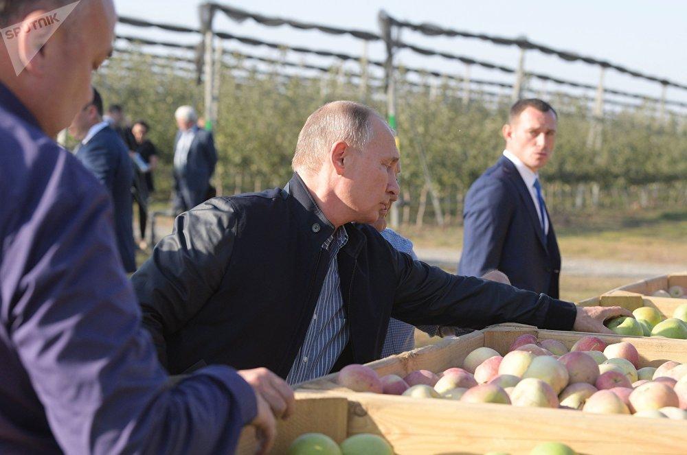 الرئيس فلاديمير بوتين ورئيس الوزراء الروسي دميتري مدفيديف أثناء زيارة عمل إلى الحقل الزراعي راسفيت ستافروبل الروسية 9 أكتوبر/ تشرين الأول 2018