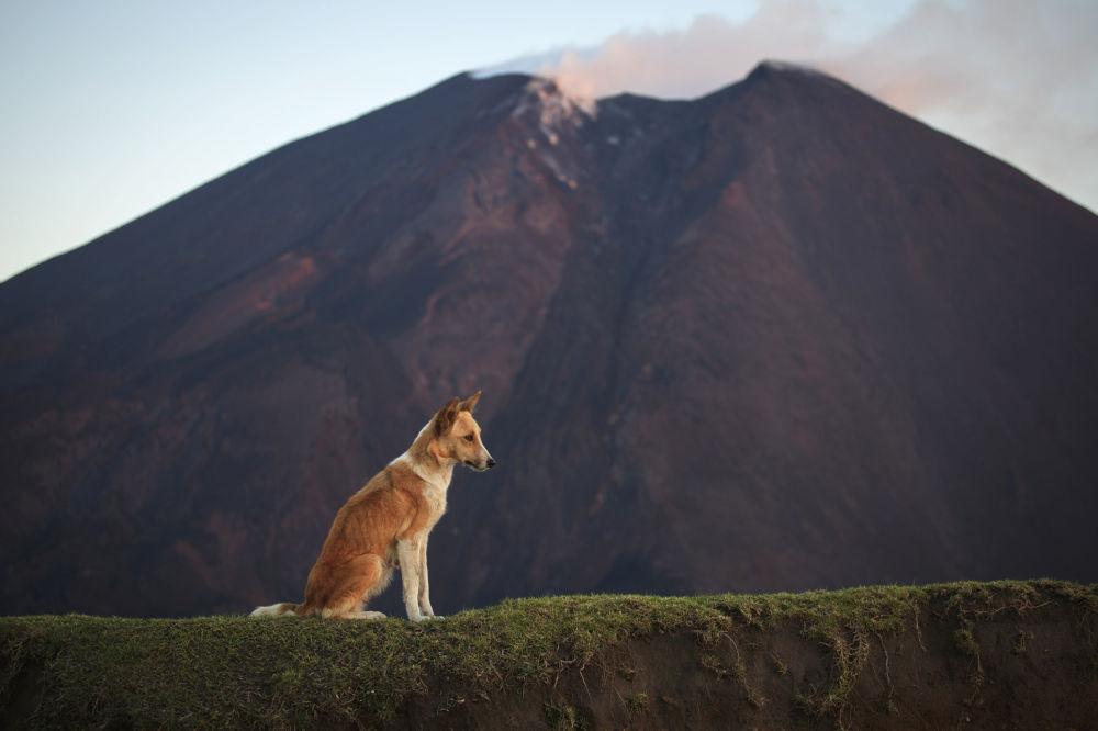 بركان باكايا، غواتيمالا