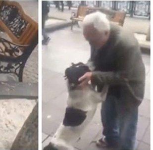 فيديو مؤثر لكلب يلتقي صاحبه بعد غياب 3 سنوات