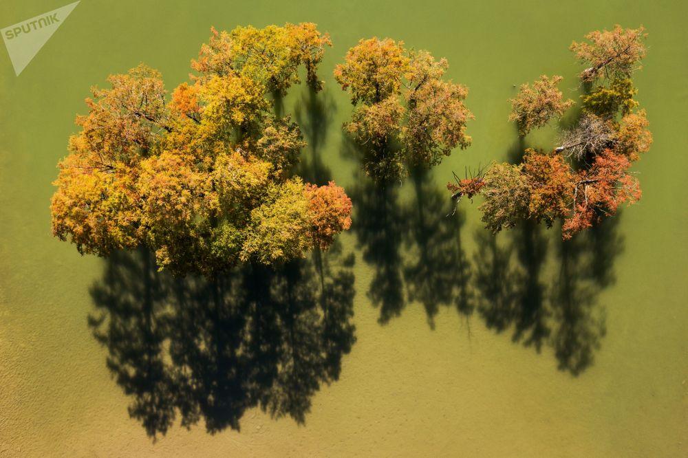 أشجار السرو في بحيرة السرو في إقليم كراسنويارسك