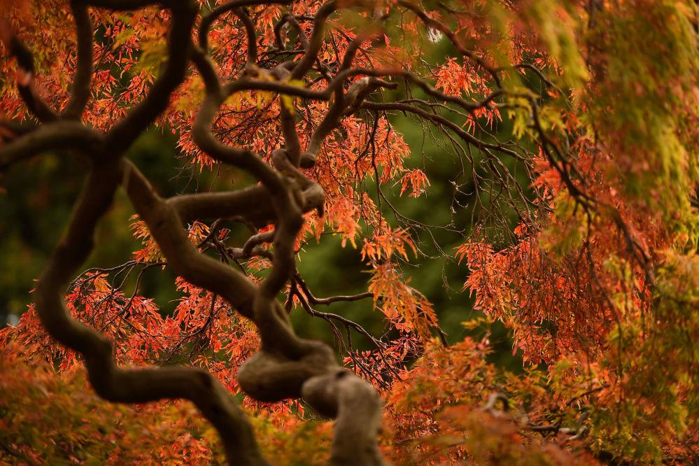 أشجار حديقة النباتات في دبلن، أيرلندا