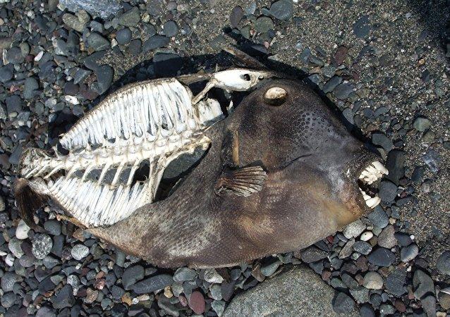 سمكة افترست الديناصورات
