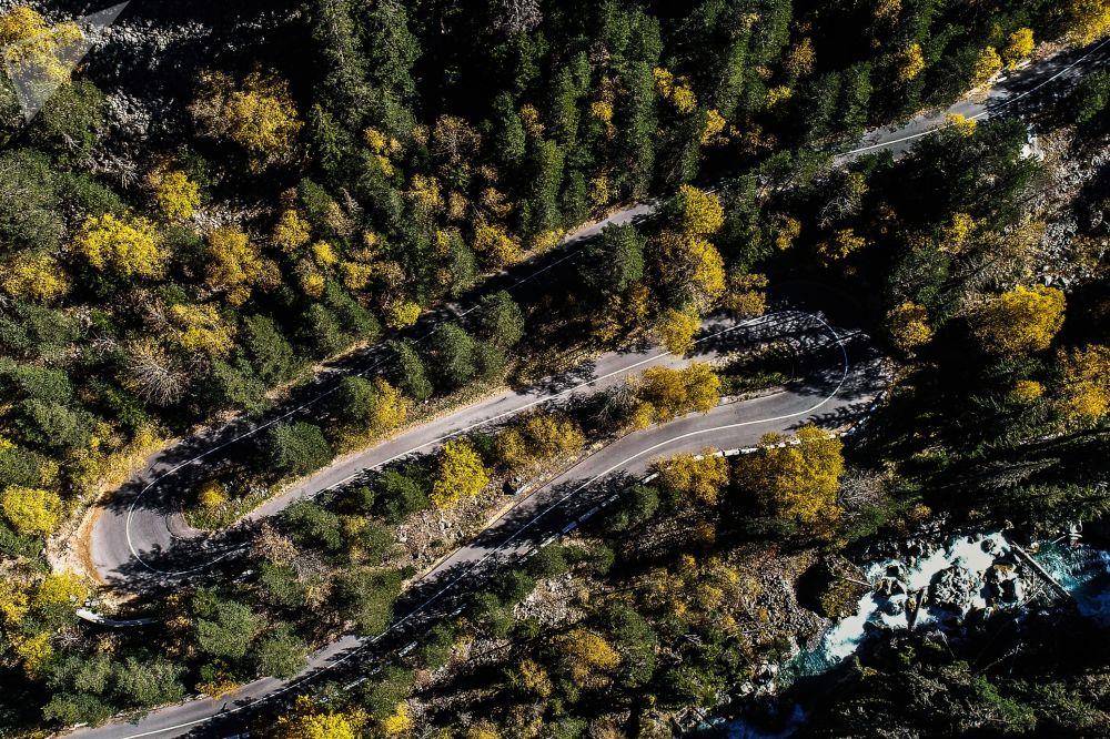 طريق بين أشجار الحديقة الوطنية تيبيردينسك في جمهورية كاراتشايفو-تشيركيسيا الروسية