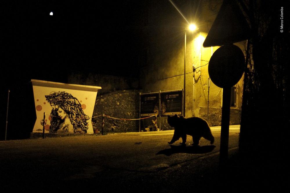 صورة (Crossing paths)، للمصور ماركو كولومبو من إيطاليا، الفائز في فئة الحياة الحضارية  بالمسابقة