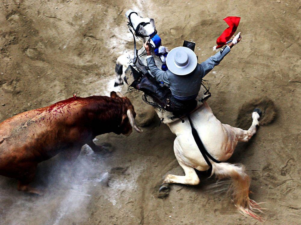 صورة بعنوان Matador de Toros، للمصور لويس هنري أغوديلو كانو، الحاصل على المرتبة الثانية ف فئة الرياضات