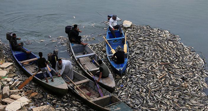الأسماك النافقة في نهر دجلة في العراق