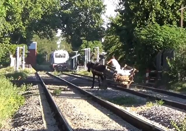 سائق عربة يعرض حياته للخطر لإنقاذ حصانه من موت محتم