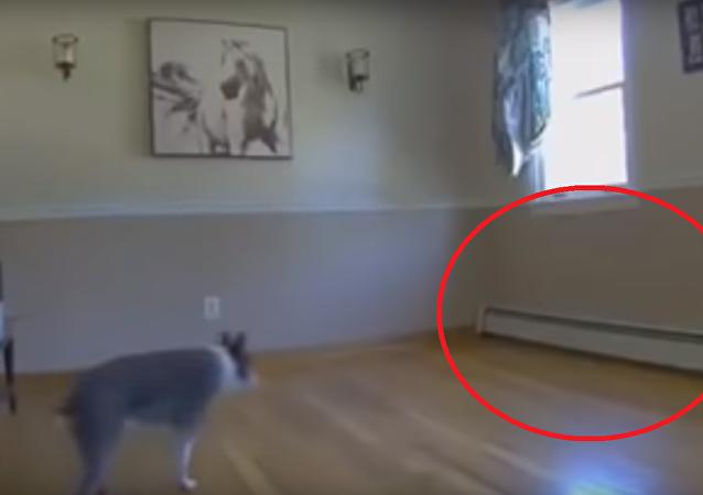 شاهد ماذا حصل لكلب أعمى أزيلت أريكته من مكانها