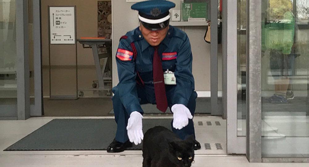 القط في متحف أونوميتشي في مقاطعة هيروشيما اليابانية