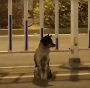 كلب ينتظر صاحبته شمال الصين