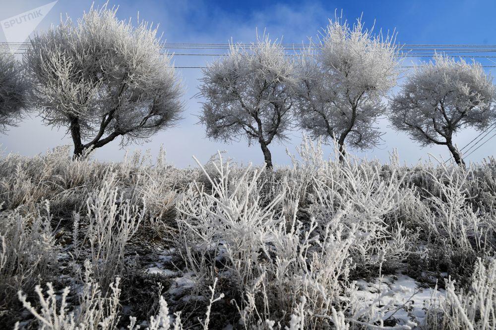 أشجار مغطاة بالصقيع على الحدود مع السد في منطقة كراسنويارسك