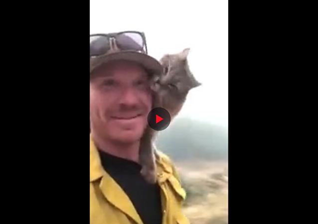 رجل إطفاء ينقذ قطا من حرائق كاليفورنيا