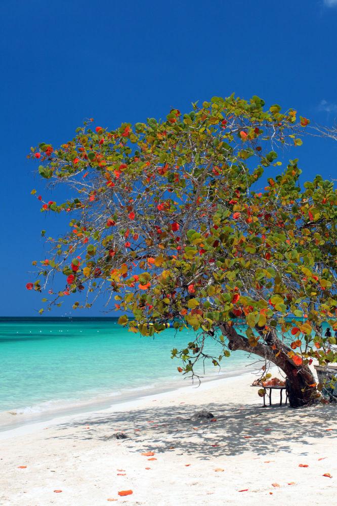 شاطئ سيفن مايل في جامايكا