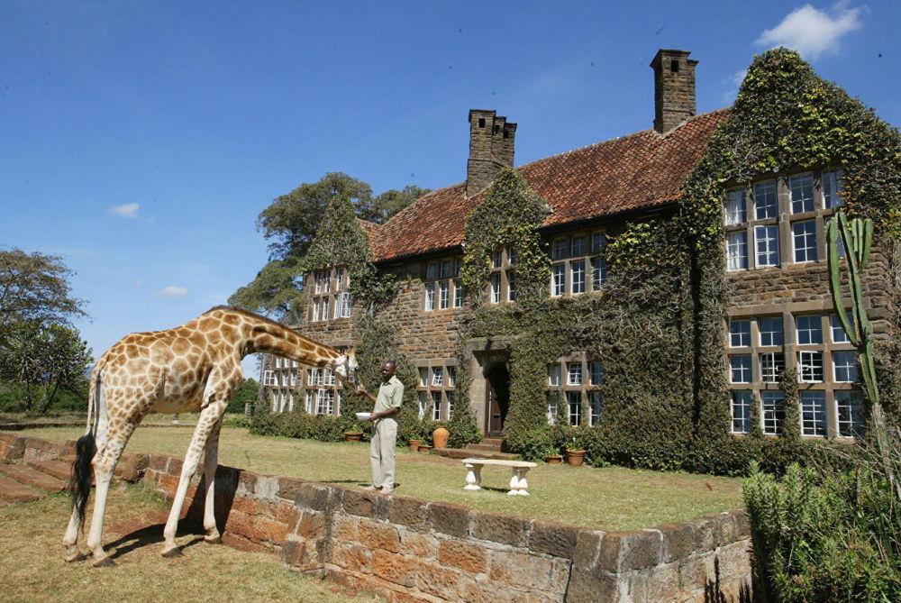 فندق جيراف مانور (Giraffe Manor) في نيروبي، كينيا