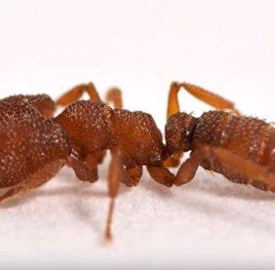 أسرع نملة في العالم