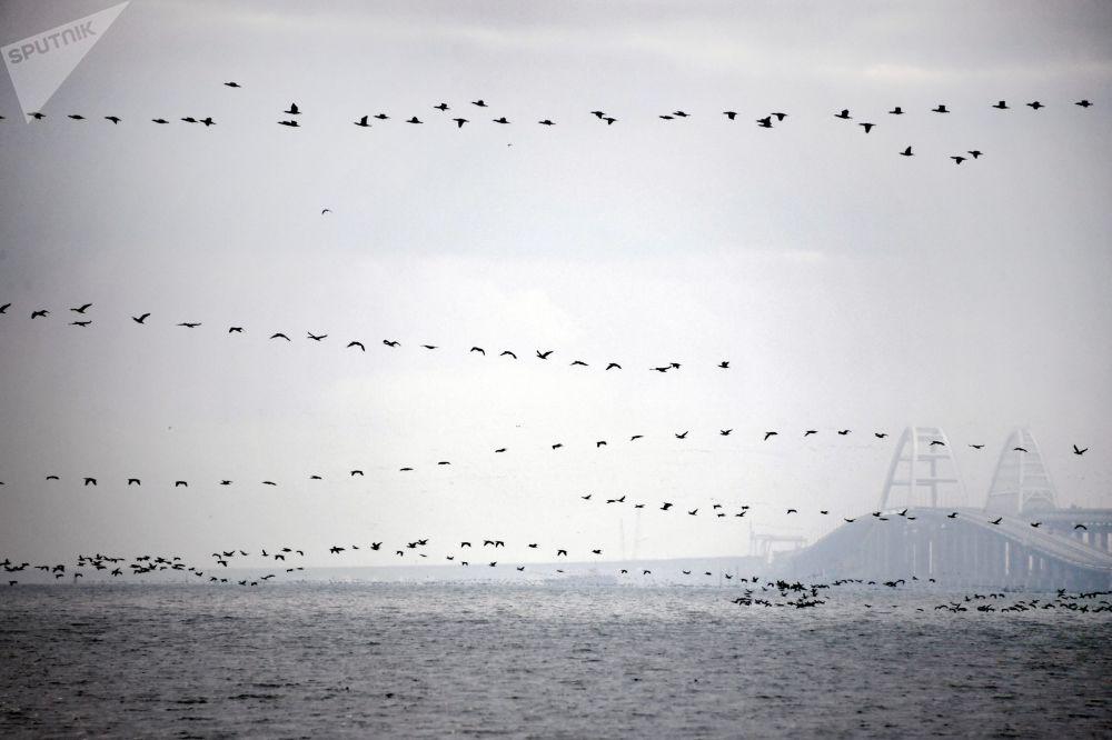 طيور تحلق عبر مضيق كيرتش في القرم. يذكر أن حاولت سفن عسكرية أوكرانية عبور مضيق كيرتش في 25 نوفمبر/ تشرين الثاني 2018، فتم إغلاق المضيق أمام جميع أنواع السفن