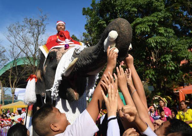 فيل يوزع الهدايا أثناء الاحتفال بعيد الميلاد في تايلاند
