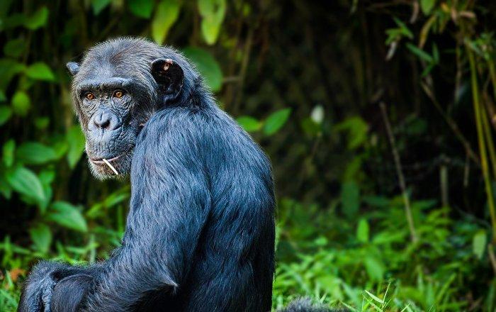 مع القردة والماعز والفئران… عمليات تهجين مخيفة للحيوان مع الإنسان