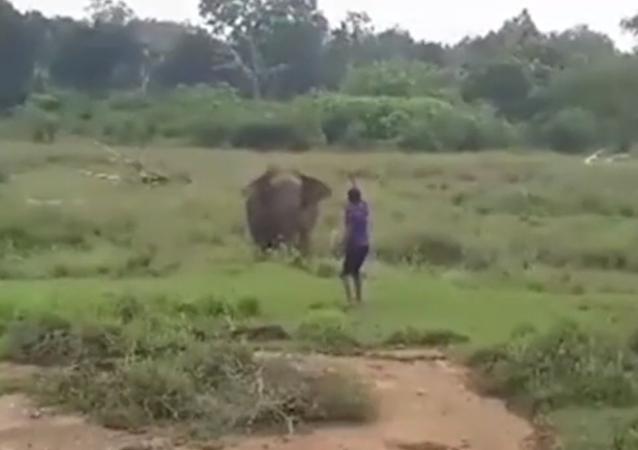 فيل يهاجم رجل حاول تنويمه مغناطيسيا ويقتله بقدميه الضخمتين