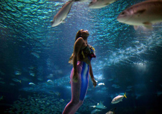 تسبح طالبة الأحياء البحرية، البرازيلية إيزابيلا كاردوزو، 21 عاما، كعروس البحر في حوض ريو دي جانيرو (AquaRio) لتوجيه الانتباه إلى مخاطر تلوث المحيطات في الحياة البحرية في ريو دي جانيرو، البرازيل في 14 يناير/ كانون الثاني 2019.