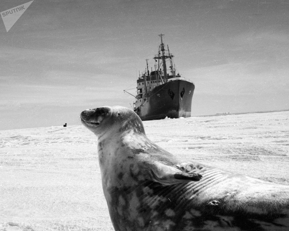 ختم على خلفية سفينة للأبحاث العملية في أنتاركتيكا