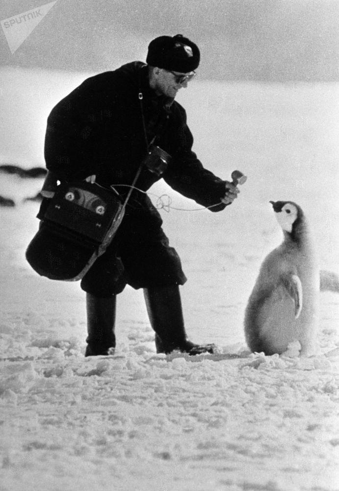 مراسل من موسكو يقابل بطريقا من باب الطرافة في أنتاركتيكا