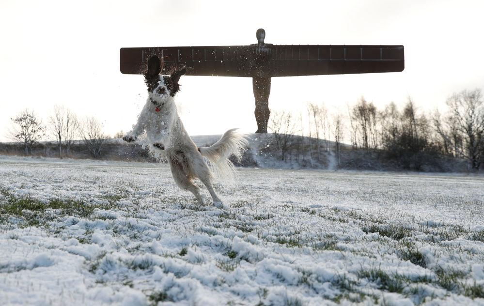 كلب يلعب في الثلج في غيتسهيد، بريطانيا 17 يناير/ كانون الثاني 2019