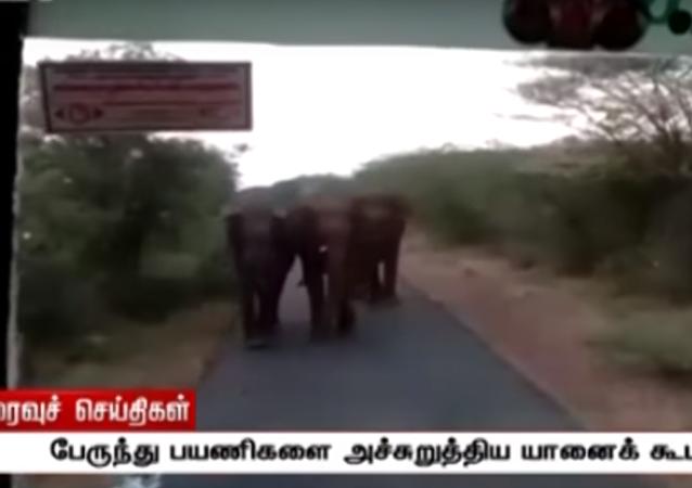 قطيع من الفيلة