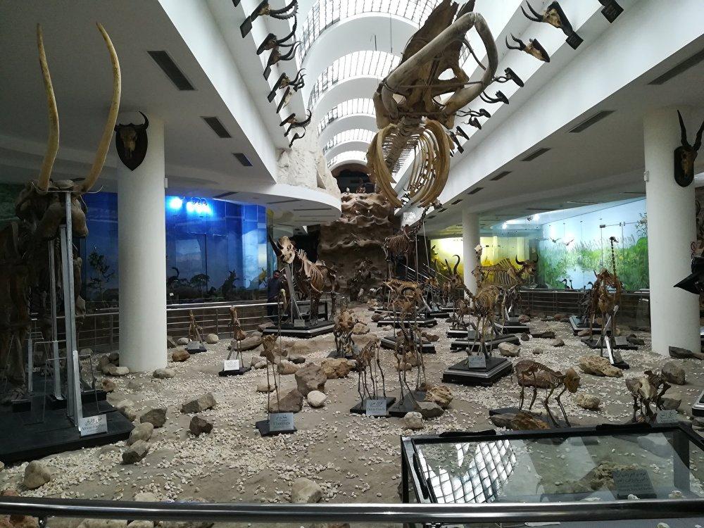 المتحف الحيواني في حديقة الحيوان في الجيزة بالقاهرة