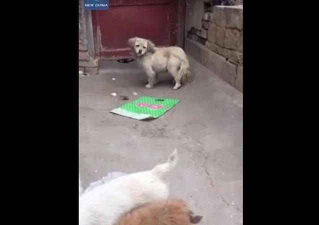 جرو يحضر الطعام إلى أمه