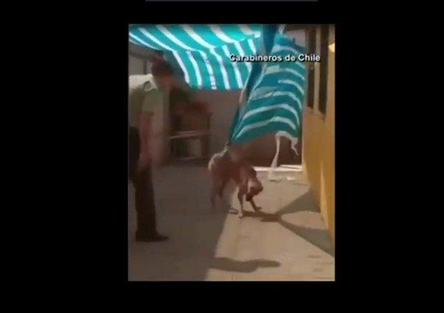 بالفيديو .. ماذا فعل كلب مع ضابط شرطة