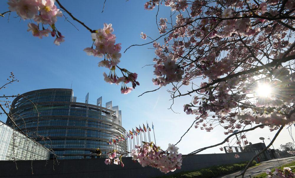 تفتح أزهار شجر الكرز (ساكورا) في ستراسبورغ، شرق فرنسا 21 مارس/ آذار 2019