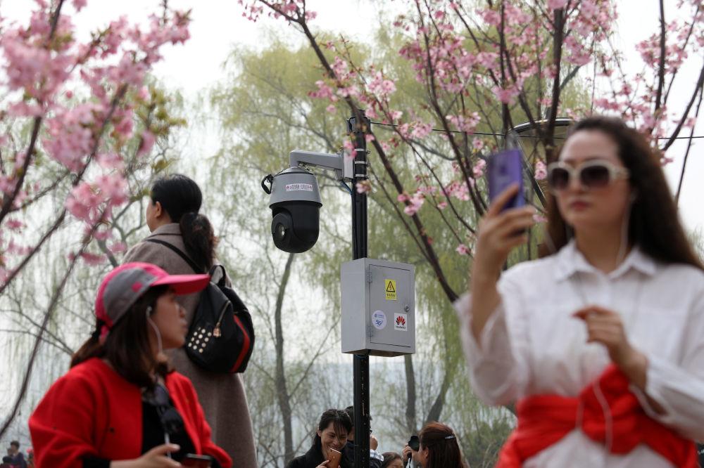 تفتح أزهار شجر الكرز (ساكورا) في بكين، الصين 19 مارس/ آذار 2019