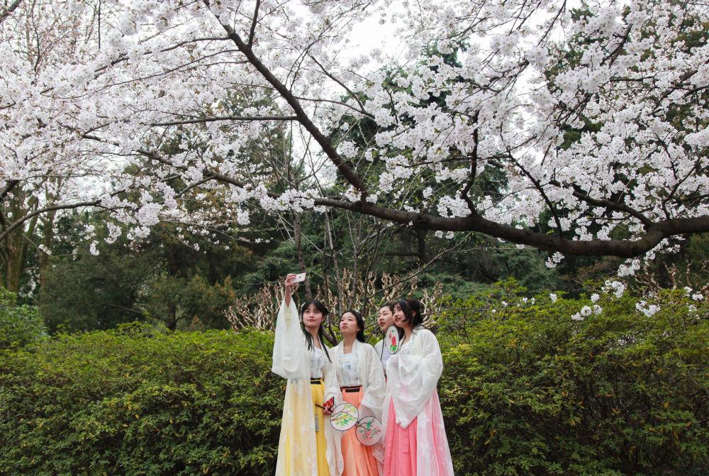 تفتح أزهار شجر الكرز (ساكورا) بالقرب من معبد جيمينغ في نانجينغ، الصين 22 مارس/ آذار 2019
