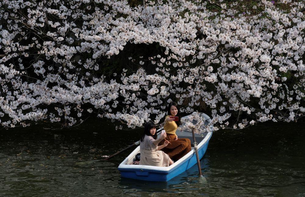 فتيات يأخذن صورة سيلفي على متن قارب على خلفية  فروع أزهار شجر الكرز في طوكيو 27 مارس/ آذار 2019