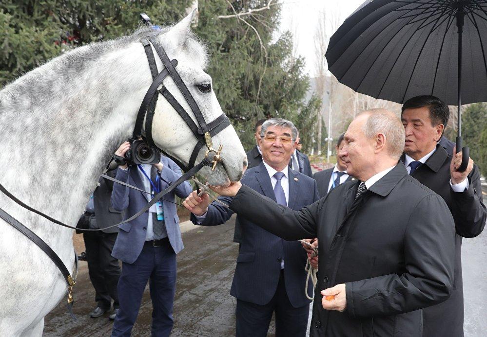 هدية للرئيس الروسي فلاديمير بوتين حصان أورلوفسكي