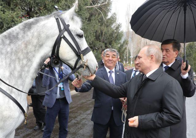 الرئيس فلاديمير بوتين يتلقى هديته من نظيره القرغيزي سورونباي جينبيكوف حصانا من فصيلة أورلوف، بشكيك، قرغيزستان 28 مارس/ آذار 2019