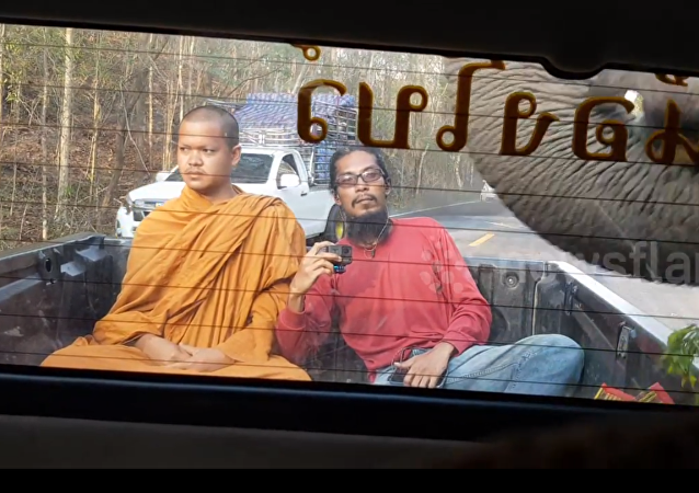 فيل يسرق راهبا بوذيا وزميله