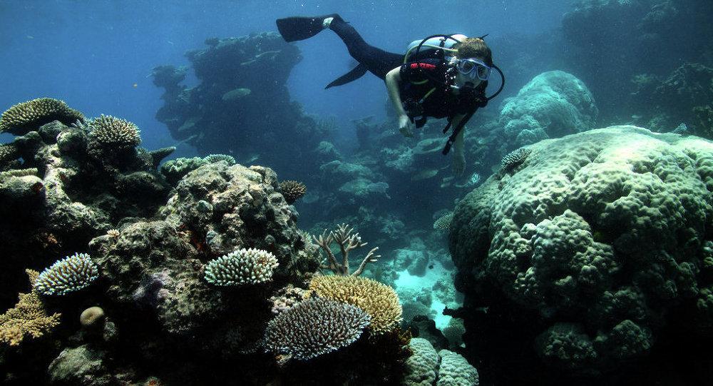 الشعاب المرجانية في الحاجز المرجاني العظيم