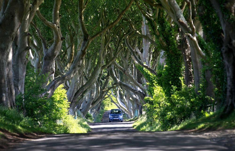 غابات دارك هيدجيز في إيرلندا الشمالية