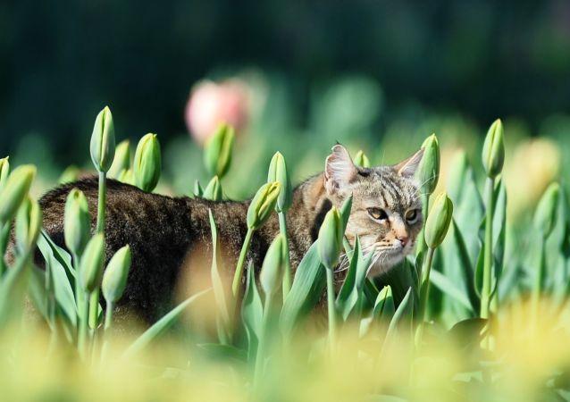 قطة في بستان من أزهار الأقحوان في حديقة نيكيتسكي النباتية في شبه جزيرة القرم