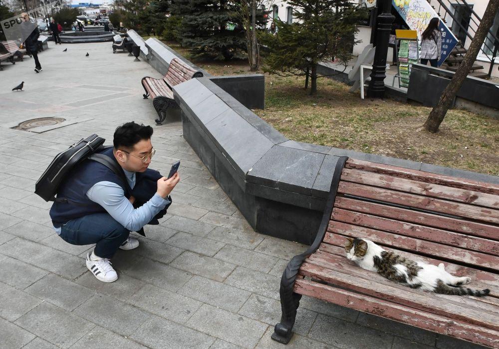 سائح يصور قطة في شارع الأدميرال فوكين في فلاديفوستوك