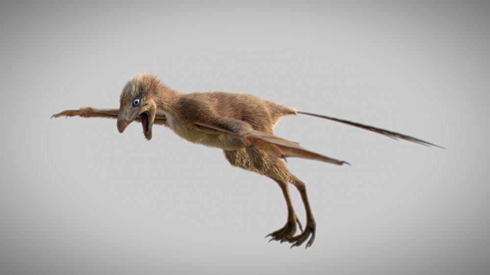 ديناصور أمبوبتيركس لونغيبراتشيوم