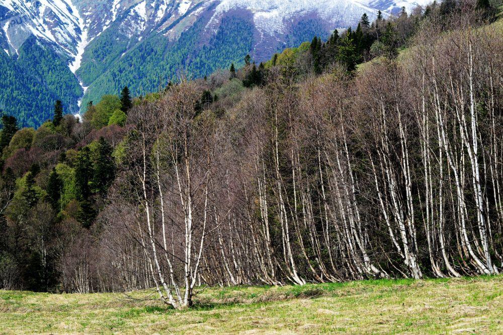 منظر للجزء الشمالي من المحمية الطبيعية القوقازية باسم خ. غ. شابوشنيكوف