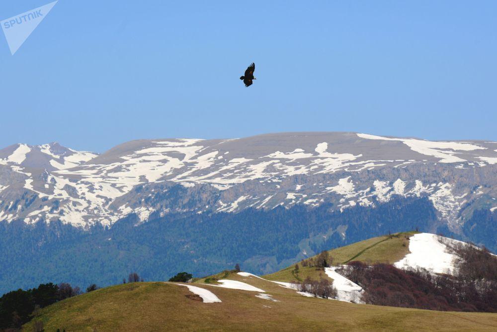 نسر يحلق فوق المحمية الطبيعية القوقازية باسم خ. غ. شابوشنيكوف